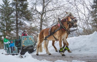 Carrozza trainata dai cavalli ad Andalo - foto Matteo De Stefano